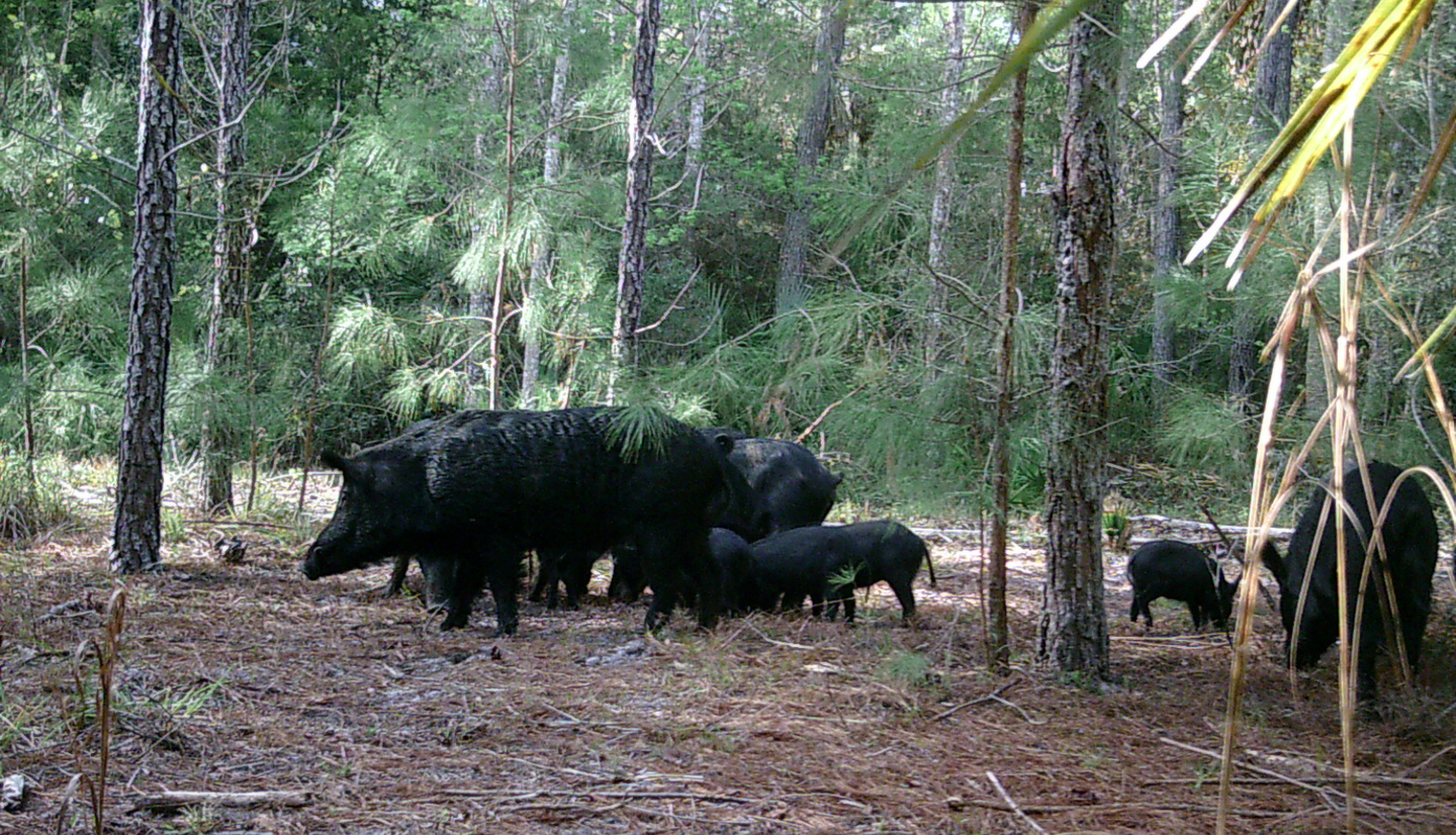 Upcoming Training: Florida Firearms Training Hog Hunting School.